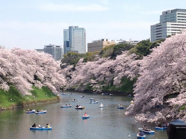 千鳥ヶ淵の桜をボートで堪能!待ち時間・混雑回避のコツとは?