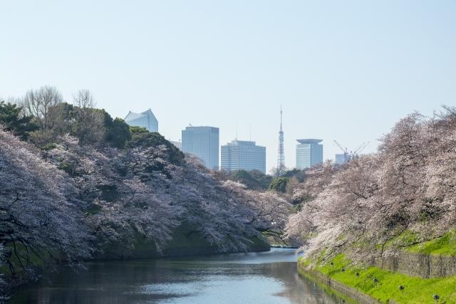 千鳥ヶ淵の桜のおすすめルート・屋台・見どころポイントを解説します!