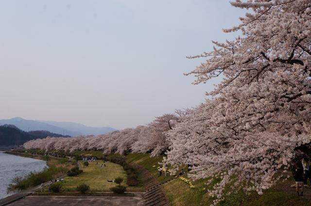 角館の桜の知っておくべき混雑状況・駐車場・交通規制情報まとめ
