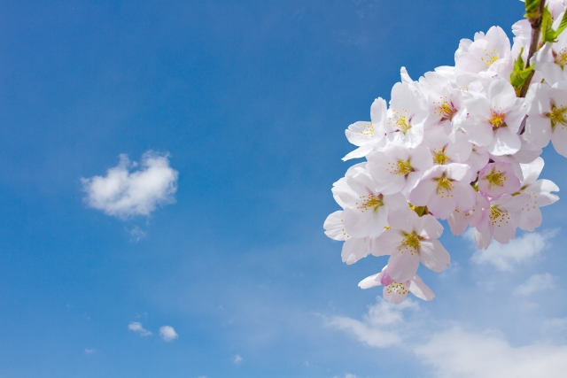 東京都内の桜の名所ランキング5選!夫婦・カップルのデートにおすすめ2021