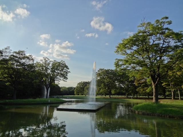 代々木公園の桜の場所取り・屋台売店・駐車場等の役立つお花見情報まとめ