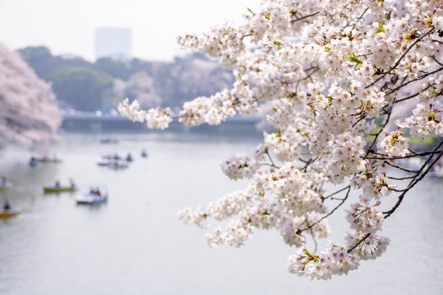 千鳥ヶ淵の桜2020はライトアップもボートも中止!新型コロナで混雑はどうなる?