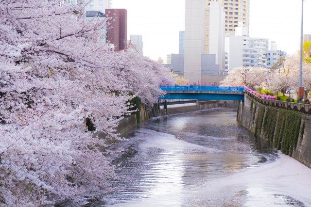 目黒川の桜祭り2020は新型コロナで中止!ライトアップなしで混雑はなくなる?